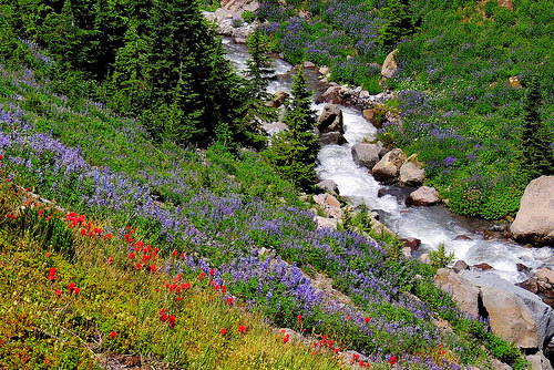 Native Plants In Bloom On Forest Service Lands The Pacific Northwest
