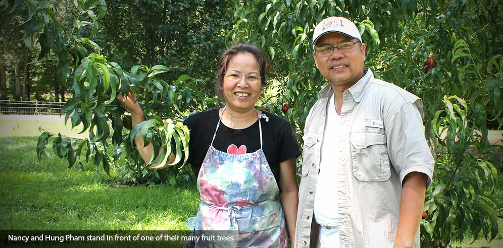 Nancy and Hung Pham stand in front of one of their many fruit trees.