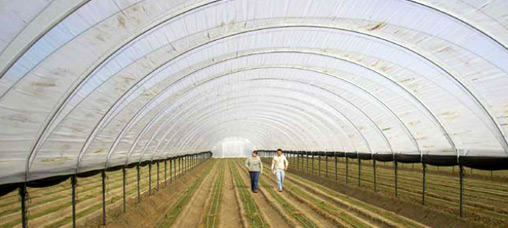 Photo: USDA's Natural Resources Conservation Service supported the construction of over 4,200 high tunnels on farms throughout the country in 2010 and 2011.