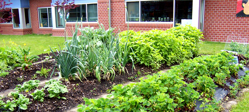 The school's garden at Cesar Chavez Elementary School in Eugene (4J) School District (OR)