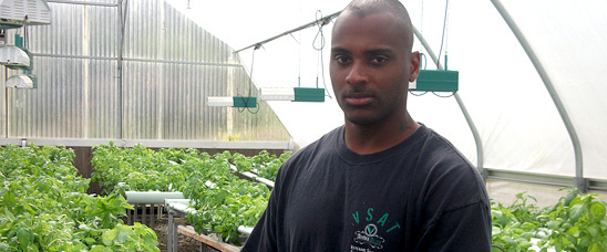 A veteran and participant of the Veterans Sustainable Agriculture Training program handles basil at an organic hydroponic farm in southern California. The program, started by decorated Marine sergeant Colin Archipley, supports veterans in starting their own agricultural enterprises.