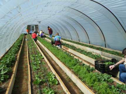 Students from Edmond North High School harvesting vegetables at Phocas Farms in Edmond, OK. One of the farm's four seasonal high tunnels was built with support from USDA.