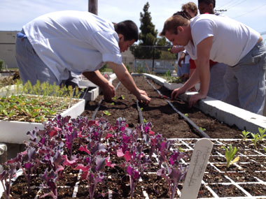 The culinary arts program students plant vegetables. The raised bed was built by cement masonry students.