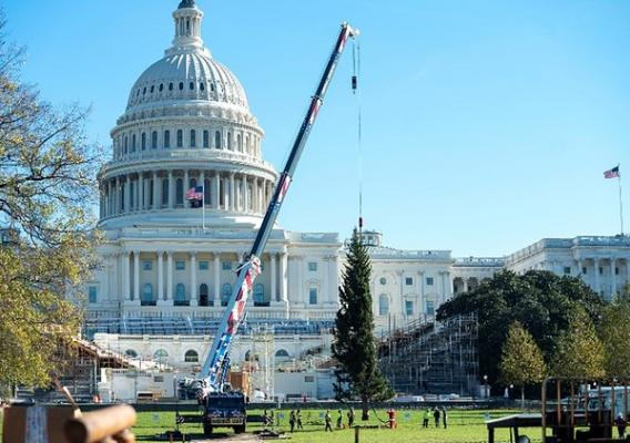 The Peoples' Tree is positioned in place on the West Lawn of Capitol Hill