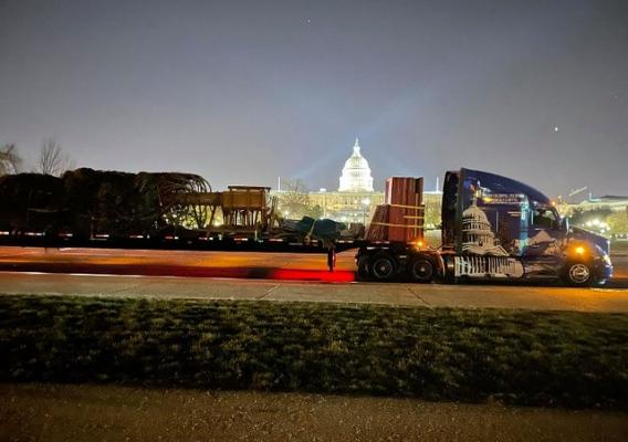 The U.S. Capitol Christmas Tree