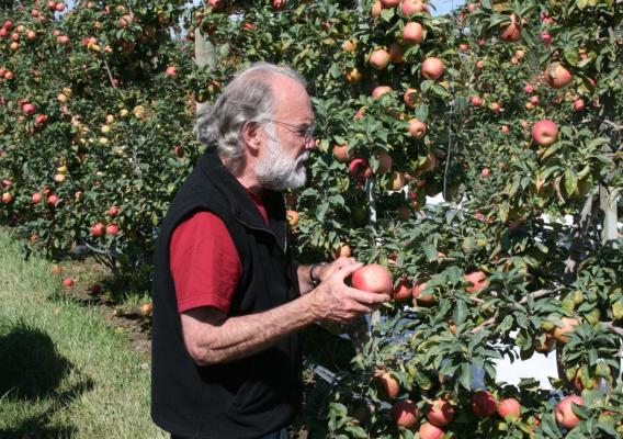 A Farm Storage Facility Loan helped the Belisles purchase and install a cooler that increased their apple storage capacity by 210 bins. They now have more flexibility when it comes to marketing their apples.