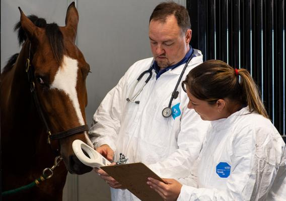 APHIS veterinarians checking a horses's identification against its paperwork during an import inspection