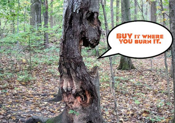 A tree with text overlay 'Buy it Where You Burn It'