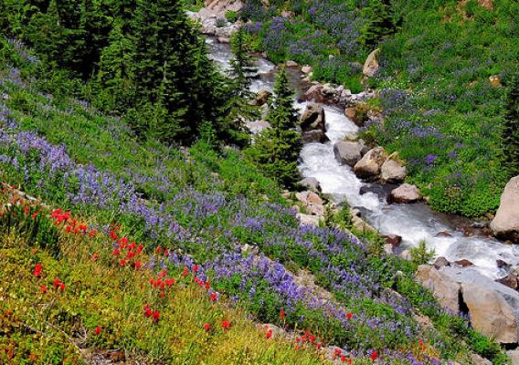 Native plants in bloom on Forest Service lands in the Pacific Northwest.
