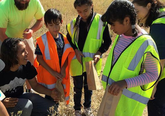 Metro Denver Nature Alliance partners collecting native seeds with Denver area fourth graders