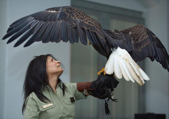 Jo Santiago with Freedom, an 18 year old bald eagle