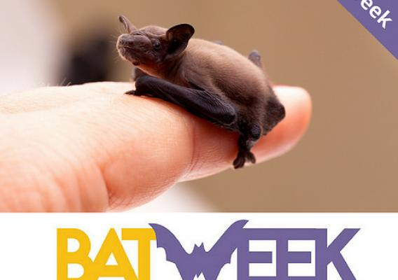 A person holding a small bat