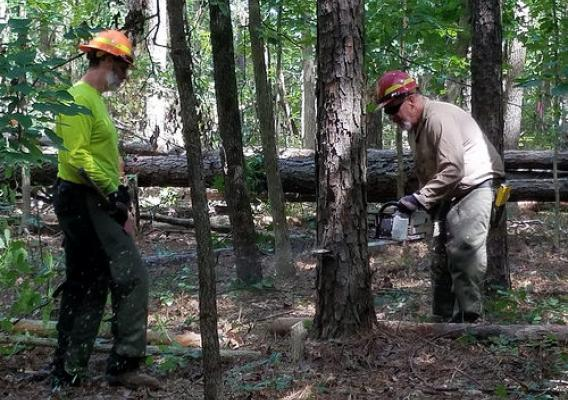 Mark Tanner (left) and Jeff Myers (right), sawyers with the U.S. Forest Service, cutting southern pine beetle-invested trees