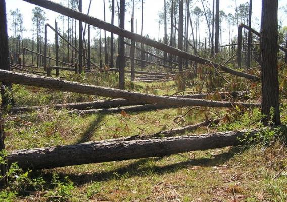 Timber damage on John Alter's land in Florida