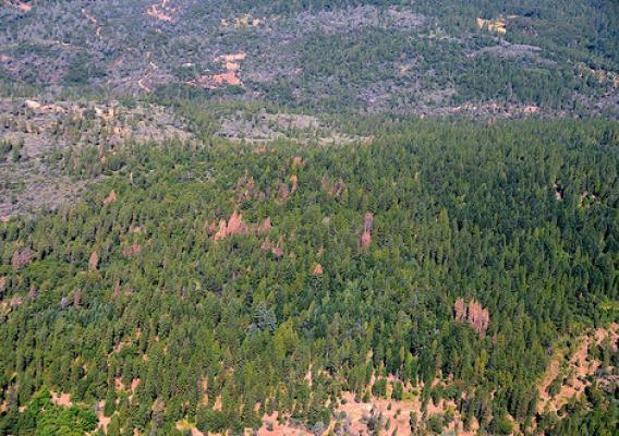 Category 6-level ponderosa pine mortality