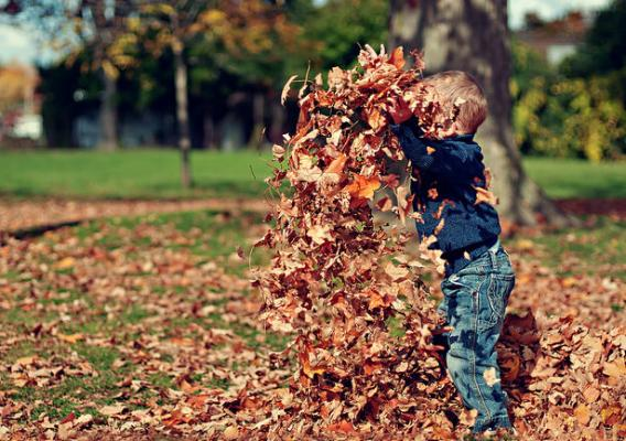 A boy playing in dry leaves