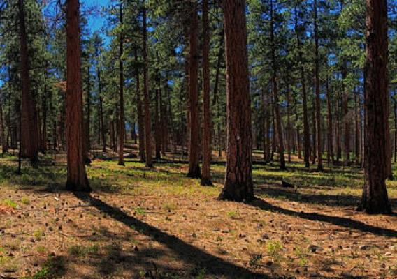 Forests in the Greater La Pine Basin