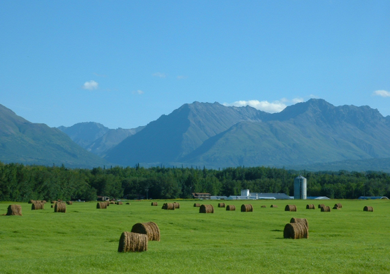 Mountains and hay bales in Alaska