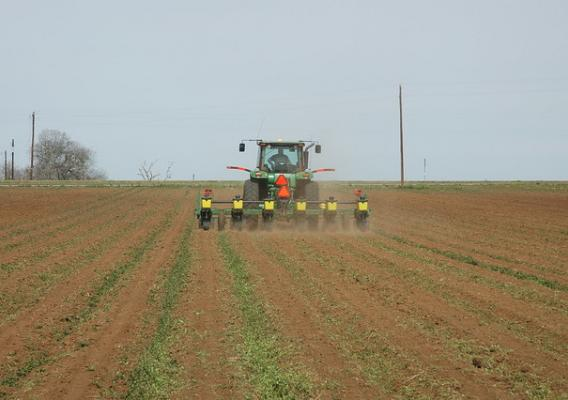 Corn planting in Burleson County near Caldwell, Texas