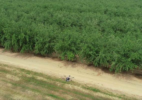 A drone used to map orchards and deter birds that damage crops