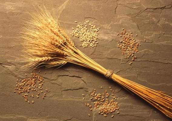 Different varieties of wheat