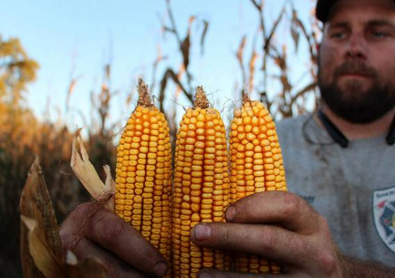 North Carolina farmer Russell Hedrick holding corn