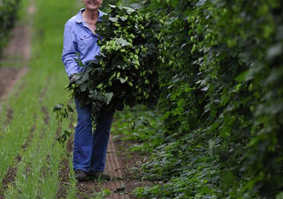 Gayle Goschie, a third generation Oregon farmer at Goschie Farms, Inc., standing in a hop yard