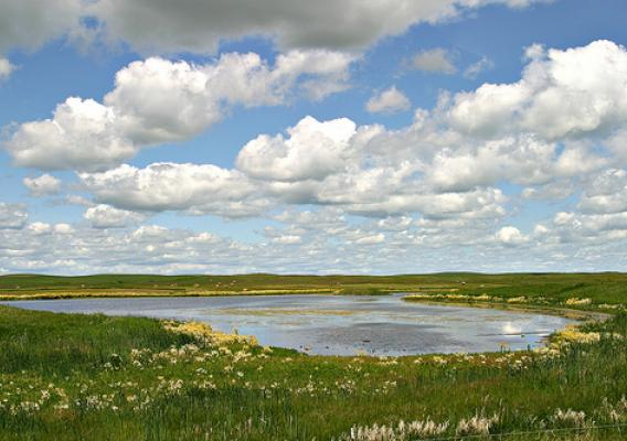 A Missouri Coteau wetland near Bismarck, N.D., in the heart of the Prairie Pothole Region. Credit: Jim Ringelman, Ducks Unlimited, used with permission.