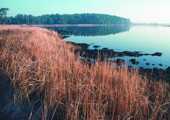 Marsh grasses in Maryland  provide valuable habitat for wildlife and help filter runoff from nearby farms. NRCS photo.