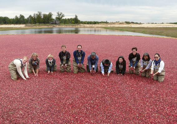 Agricultural attachés from around the world explore a cranberry marsh in Warrens, Wis.