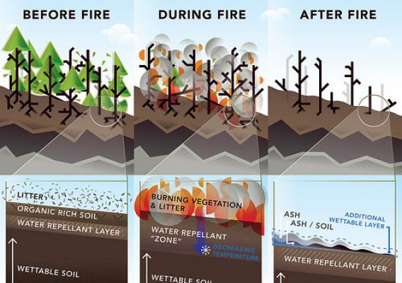 The Negative Effects of High Intensity Wildfire on Forested Land infographic