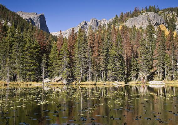 Mountain Lake With Pine Beetle Damaged Forest