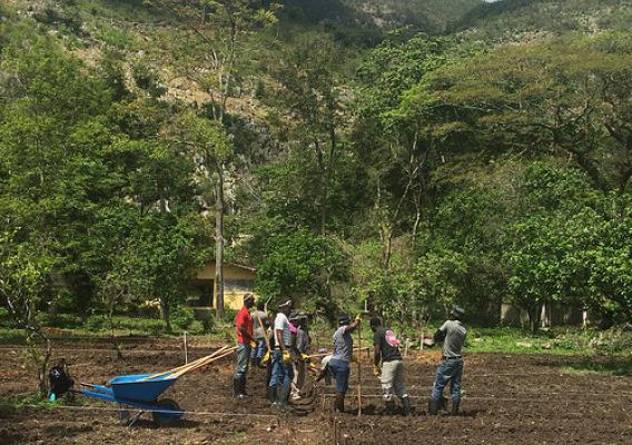 Farmers in Haiti participating in new agriculture classes