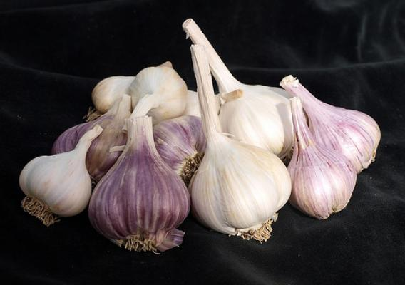 """This group of diverse garlic germplasm represents all the types that might be found at a farmer's market."" Photo courtesy of Barbara Hellier, ARS"