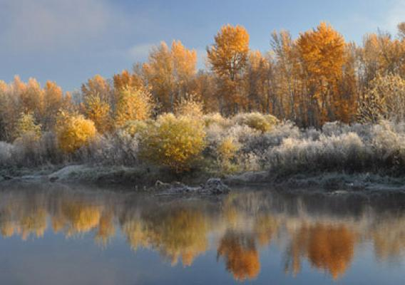 A surreal blend of colors harkens at winter yet provides peaceful warmth to fall on the Nez Perce National Forest in Idaho. While some may feel fall colors signals the end of summer, others see it as the beginning of the rebirth of spring. (U.S. Forest Service)