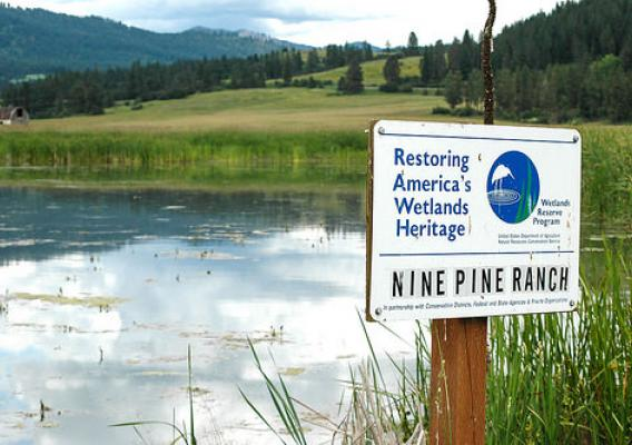 Nine Pine Ranch, a wetland easement near Chewelah, Washington, provides habitat for a variety of wildlife including yellow-headed black birds. NRCS photo.
