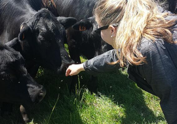 Market News reporter Alex Wright with cattle in Vermont