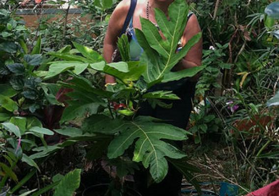 A breadfruit tree owner poses in her home garden with ornamental plants