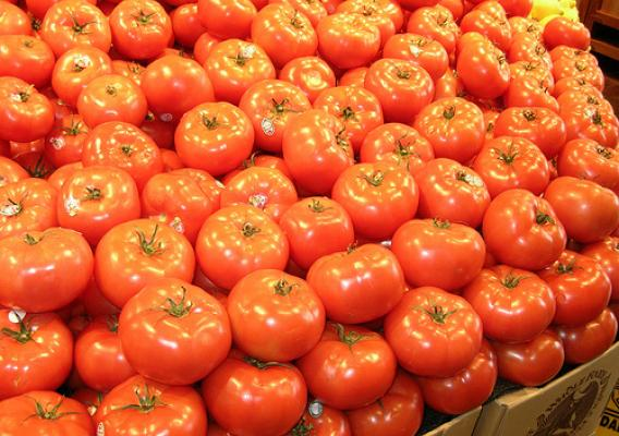 Tomatoes. Photo by Patrick Holian, Cooperative Research, Education and Extension Service-USDA.