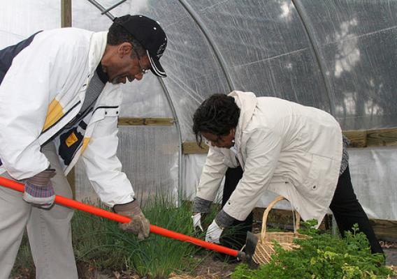 Lee and Linda Marshall harvesting herbs in the church's seasonal high tunnel