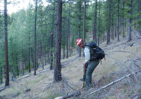 Challis National Forest Soil Scientist Jeremy Back monitoring forest soils