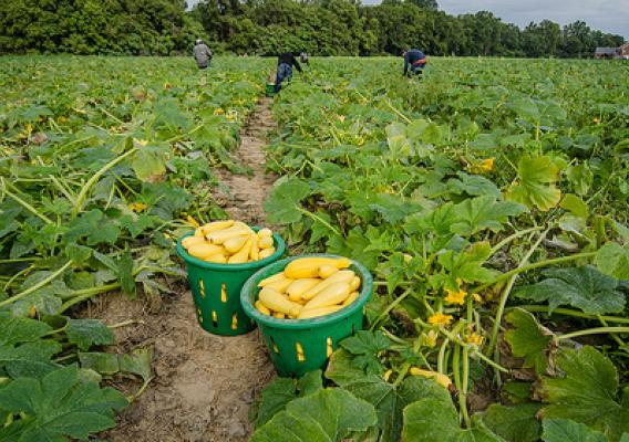 Farmers can help ensure there is enough agricultural labor in the United States at critical times in the production cycles by taking part in the Agricultural Labor survey.