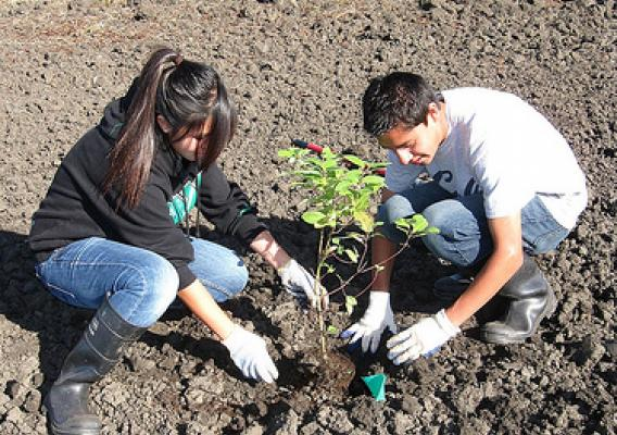 Pajaro Valley High School students plant trees, shrubs and grasses along the Pajaro River at an ARRA project site near Watsonville, CA.