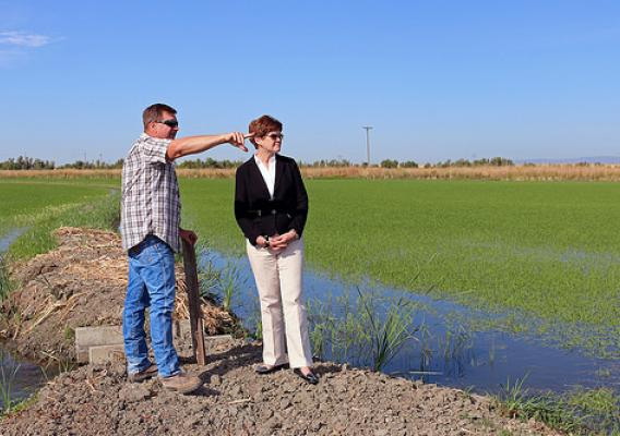 Agriculture Deputy Secretary Krysta Harden tours rice fields in the Sacramento Valley at the Yolo Bypass Wildlife Area on Jun. 24, 2014. Rice grower Mike DeWit has a cooperative arrangement to provide habitat for wildlife while growing rice. Photo courtesy California Rice Commission.
