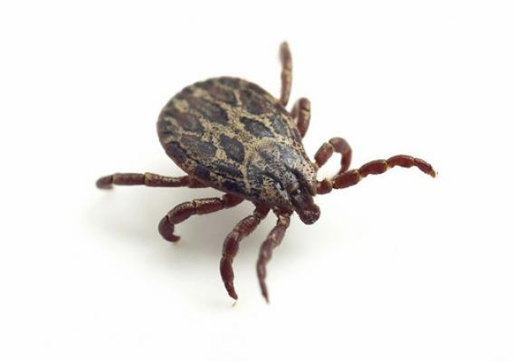 Ticks can transmit up to 14 diseases to humans – don't let the bloodsuckers ruin your summer or fall.