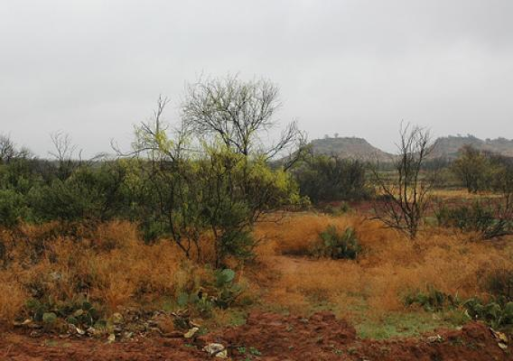 What the wildlife habitat area on Circle A Ranch looked like before ranch manager Tommy Berend used the Agricultural Water Enhancement Program (AWEP) to clear 67.7 acres to create a quail habitat for a bird release next year.