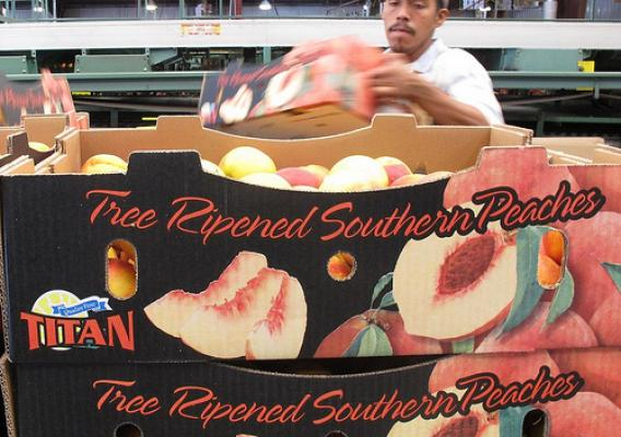 South Carolina-grown peaches are boxed and ready to be shipped to Mexico. The Mexican market opened to Georgia and South Carolina peaches for the first time in 17 years earlier this year thanks in part to a grant from the Foreign Agricultural Service's (FAS) Technical Assistance for Specialty Crops (TASC) program. (Photos courtesy of South Carolina Peach Council)