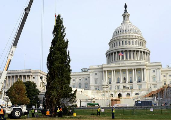 Englemann Spruce hoisted and put into place on the West Lawn of Capitol Hill