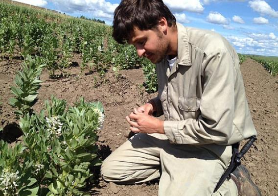 Virginia State University undergraduate Christos Galanopoulos learns about agricultural research and collecting field samples during his internship at ARS's Plant Germplasm Introduction and Testing Research Unit in Pullman, Washington. Photo by Jinguo Hu, Agricultural Research Service.