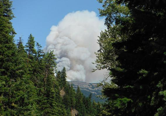 A column of smoke rising from a forest fire
